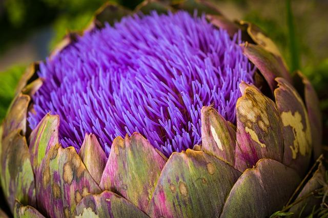 fialový květ.jpg