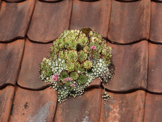 mech na střeše