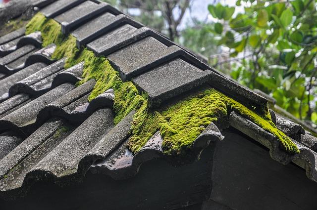 sukulenty na střeše