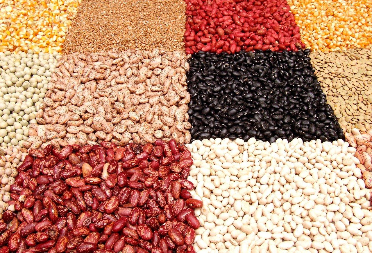 Jaké známe druhy fazolí?